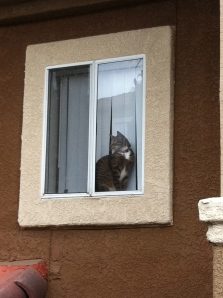 That cat.