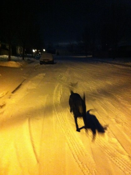 Monty in the Snow, Night.