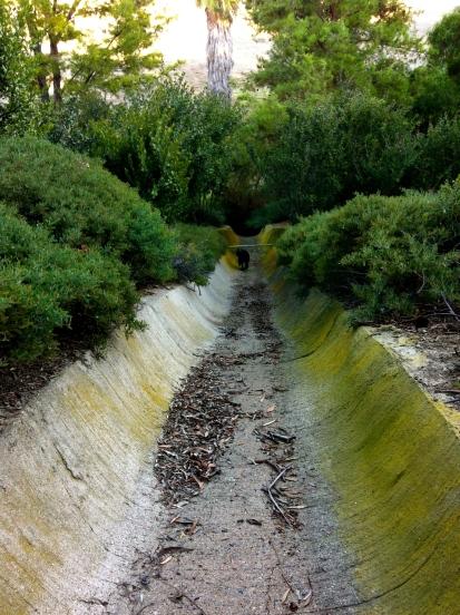 In a Ditch