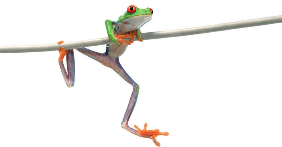 A frog hanging on wire